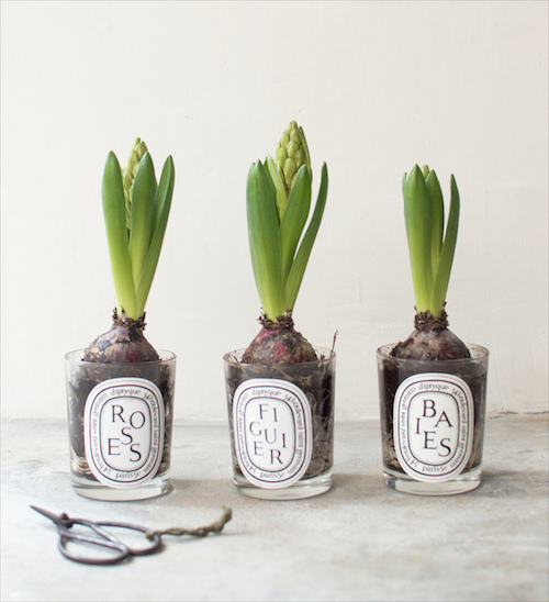 Diptyque-plant-bulbs-a-pair-and-a-spare