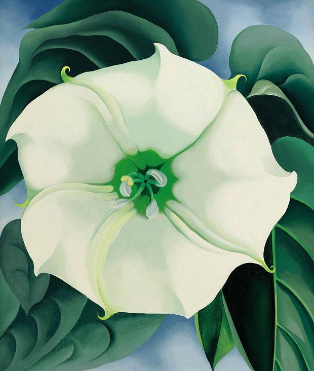 Jimson Weed, White Flower No 1 by Georgia OKeeffe Tate Modern